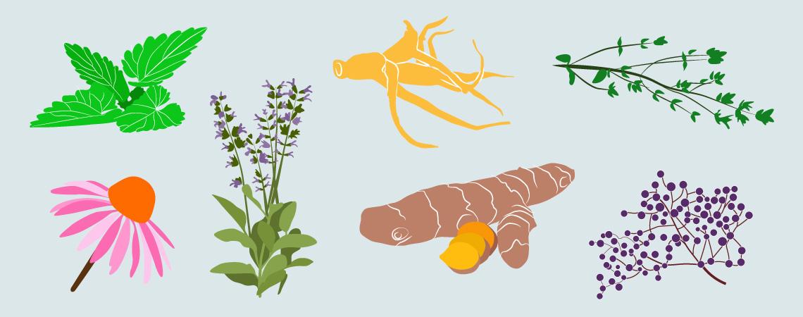 Rośliny, które wzmocnią Twój system immunologiczny