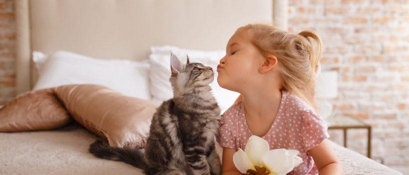 Lektura obowiązkowa dla miłośników kotów!