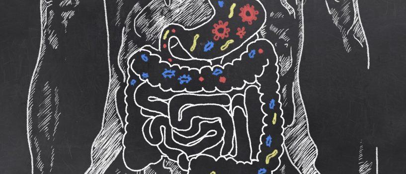 Bakterie w organizmie człowieka – gdy dobroczynne drobnoustroje zmieniają się w szkodliwe dla zdrowia